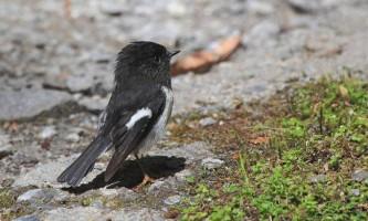 Вчені придумали як перевірити рівень iq у птахів