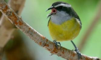 Вчені вирішили розшифрувати спів птахів