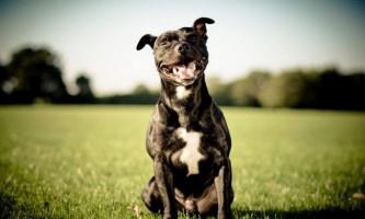 Вчені: собакам подобається дивитися, як обіймаються люди