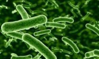 Вчені створять акумулятори, що працюють на мікроби