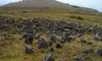 Вчені дізналися причину загибелі населення острова пасхи
