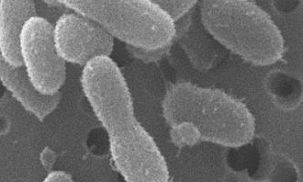 Вчені повернули до життя новий вид бактерій