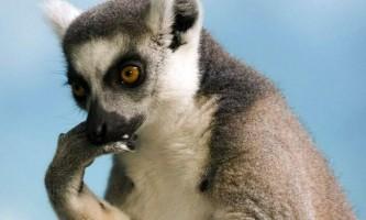 Вчені з`ясували, чому у деяких видів тварин самок більше, ніж самців