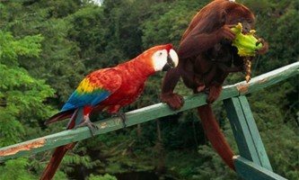 Вчені з`ясували причину високого інтелекту у птахів