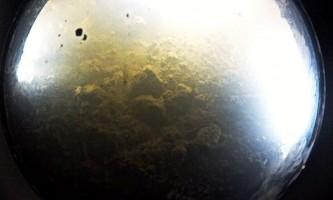 Вченим вперше вдалося виявити життя під льодом антарктиди