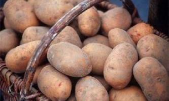 Вчимося вирощувати картоплю за голландською технологією