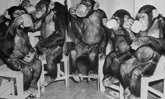 Вчені уточнили головні відмінності мозку людини від мавпячого