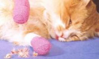 Видалення кігтів у кішок