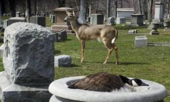 Дивовижна дружба різних видів тварин