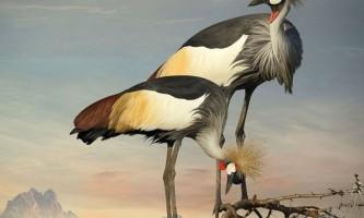 Дивно красиві і граціозні птахи