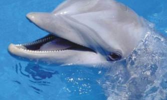 Дивовижне про дельфінів