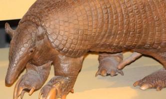 Дивовижні тварини. Гігантський броненосець