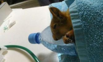 Уфимские ветеринари виходили білку, яка впала з гілки