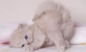 Догляд за новонародженими кошенятами