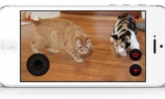 Українські розробники створюють пристрій для дистанційного спілкування з котами