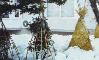 Укриття яблунь на зиму, вкриває молоді яблуні