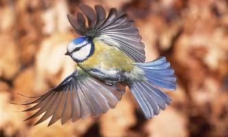 Вуличне освітлення губить птахів