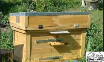 Докази для бджіл своїми руками