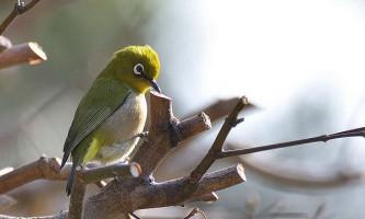 Равлики можуть покривати великі відстані в пташиних шлунках