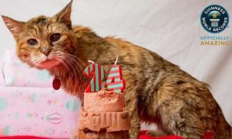 Померла найстаріша кішка у світі