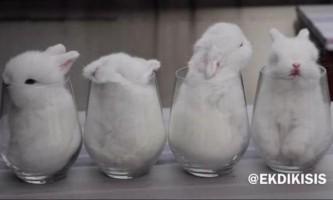 Зворушливі маленькі кролики