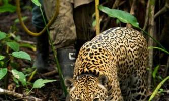 Унікальний центр порятунку диких тварин в болівії