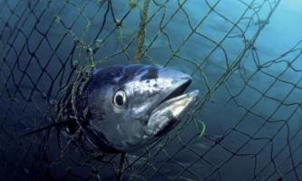 Встановлено, як серце риб продовжує битися навіть в найхолодніших глибинах океану