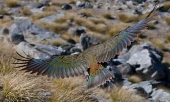 Встановлено місце походження предка всіх сучасних птахів
