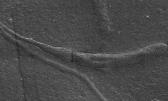 В антарктиці знайдені найдавніші сперматозоїди