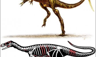 У аргентині знайдені останки невеликого тероподного динозавра тріасового періоду