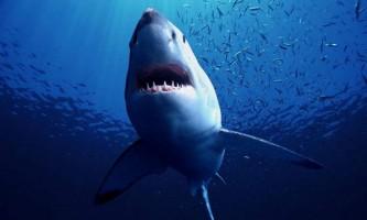 У австралії акула серйозно поранила 52-річного чоловіка