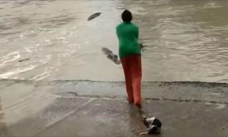 У австралії жінка відігнала крокодила шльопанці