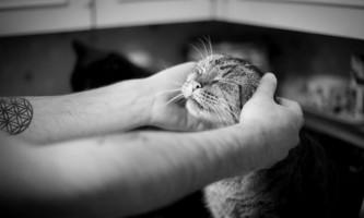 У башкирії кішка врятувала життя господареві, ледь не згорілому заживо