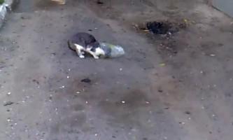 У вінницької області кішка ходила з пакетом на голові
