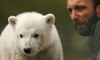 У берлінському зоопарку помер знаменитий ведмідь батіг