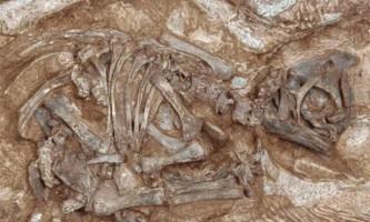 У бразилии знайшли останки невідомого науці динозавра