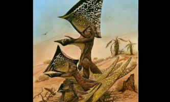 У бразилии відкрито новий вид доісторичних літаючих рептилій