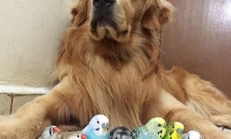 У бразилии собака живе з хом`яком і зграєю папуг
