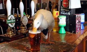 У британському пабі п`яна качка побилася з собакою