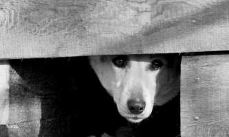 У брянської області чоловік жорстоко вбив собаку