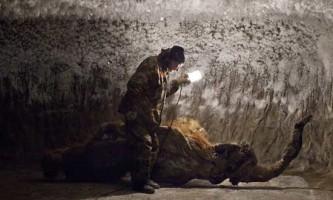 У центрі європи знайдені останки мамонта