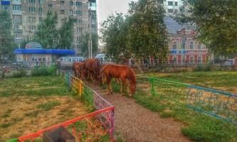 У центрі стерлитамака гуляє табун коней