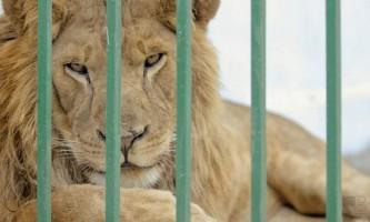 У приватному зоопарку гюмрі голодують тварини