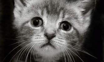 У челябінську працівник магазину вбив маленького кошеняти на очах у клієнтів