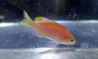 На честь барака обами хочуть назвати новий вид риб
