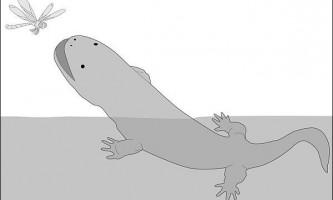 У давнину гігантські саламандри гуляли по суші