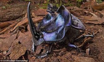 У джунглях сурінаму знайшли 46 нових видів тварин