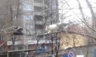 Ворона дражнить кота на гілці дерева