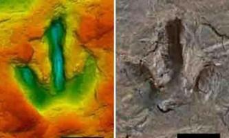 В германии виявили відбитки ступень динозаврів віком 142 млн років