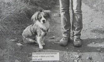 В германии собаку судять за стрес у овець - за версією позивача, 12 тварин померли від страху